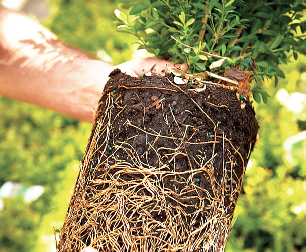 Gardening-Plant-Roots-Soil-May-13-p200