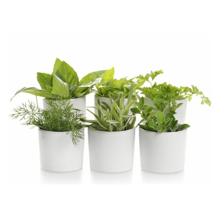 5 Popular Herbs And How To Keep Them Fresh For Way Longer