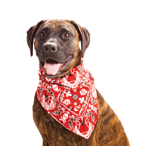 Dog-wearing-red-bandana-skull-bones