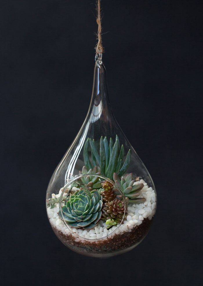 How To Make A Teardrop Terrarium In 3 Steps Chatelaine