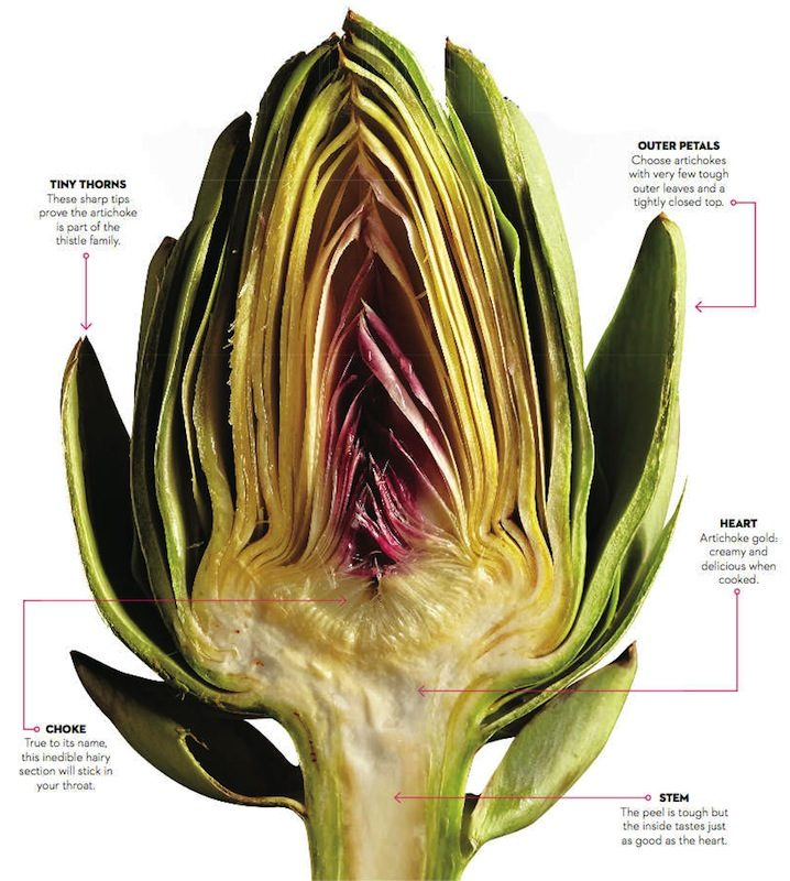 How to eat an artichoke - Chatelaine