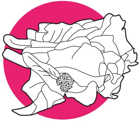 kai-lan
