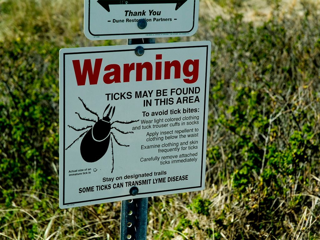 Lyme Disease Is On The Rise – Should You Worry? | Chatelaine