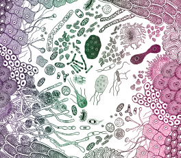 The Science Of Gut Health Could Radically Change Modern Medicine