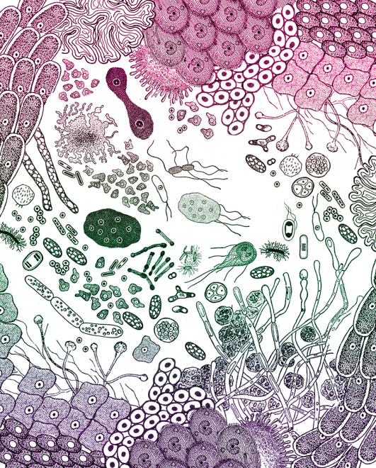 Gut health story with microbes and bacteria and virus illustration by Casie Wilson