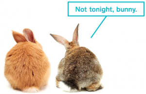 A pair of rabbits that are too tired to have sex. Photos, iStockphoto.