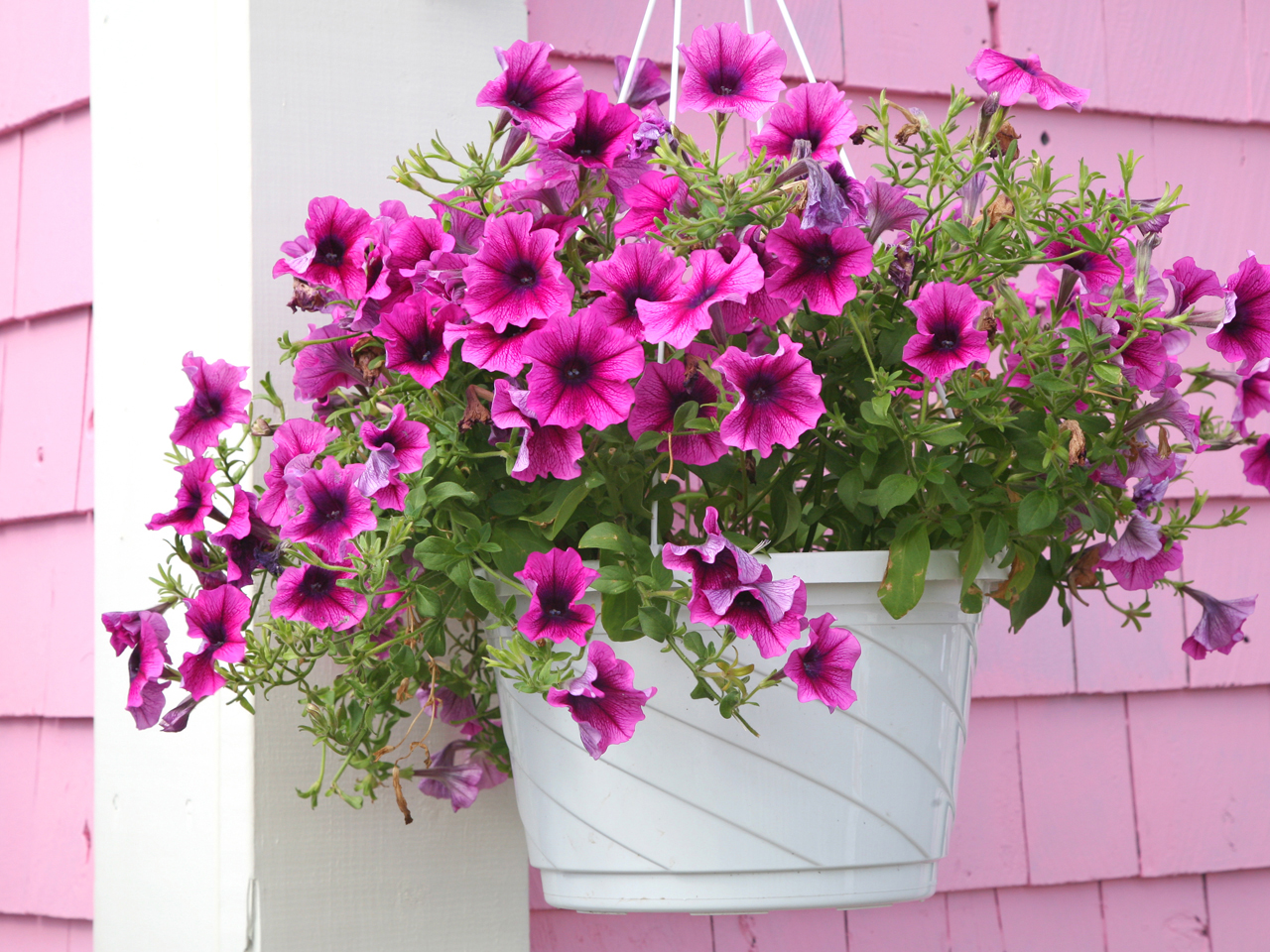 How To Plant Stunning Hanging Baskets And Containers Chatelaine