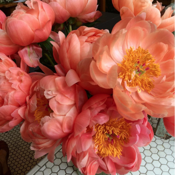 10 of the prettiest peony varieties to plant in your garden chatelaine mightylinksfo