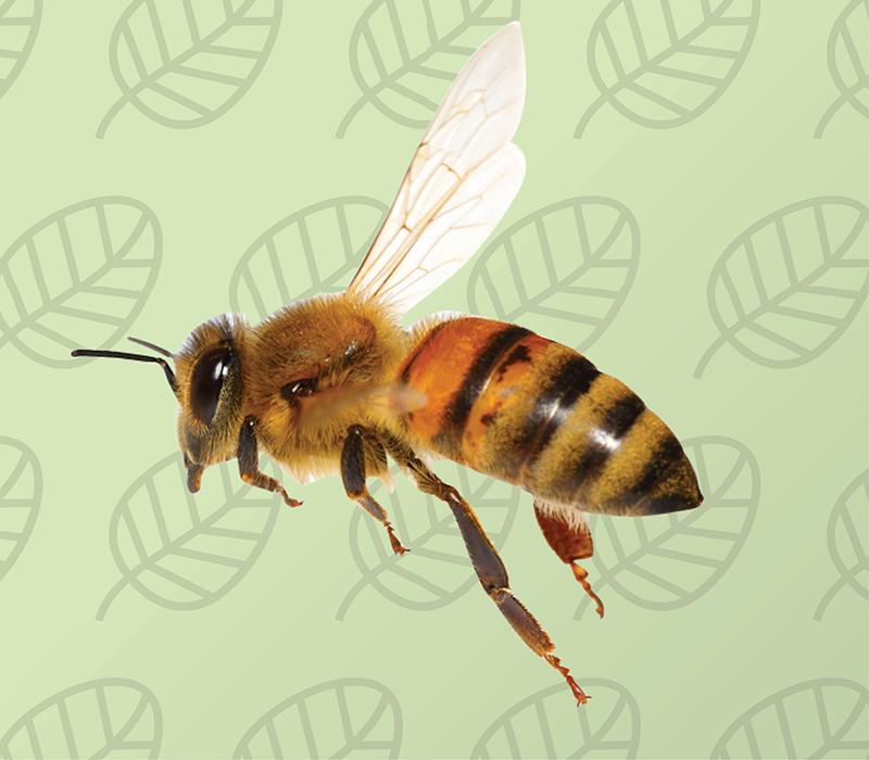 environmentally friendly bee