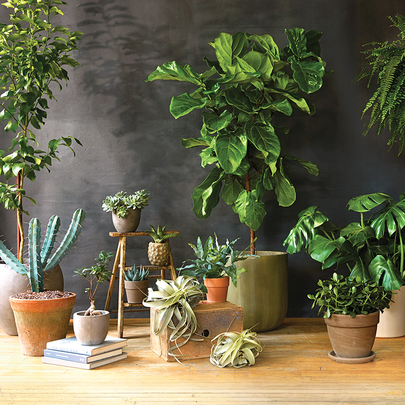 Stunning low maintenance indoor plants ideas decoration for Low maintenance indoor plants