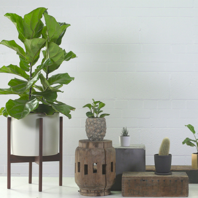 How to care for the 5 trendiest houseplants (and the best pots to use)