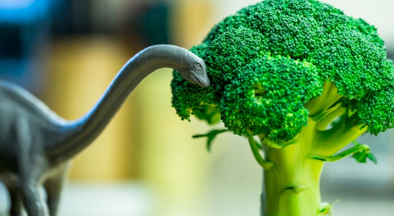 Long-necked dinosaur eating broccoli