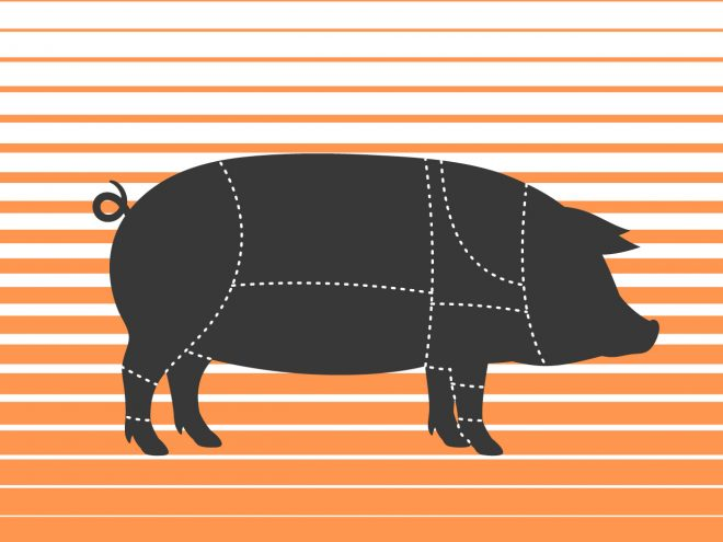 Cuts of pork - illustration of a pig and where the different cuts of meat come from