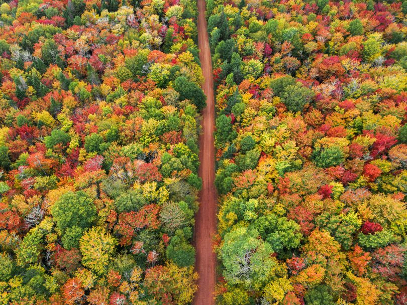 best-fall-colours-canada: Birds eye view of Confederation Trail in PEI and trees in green, yellow, red, and orange