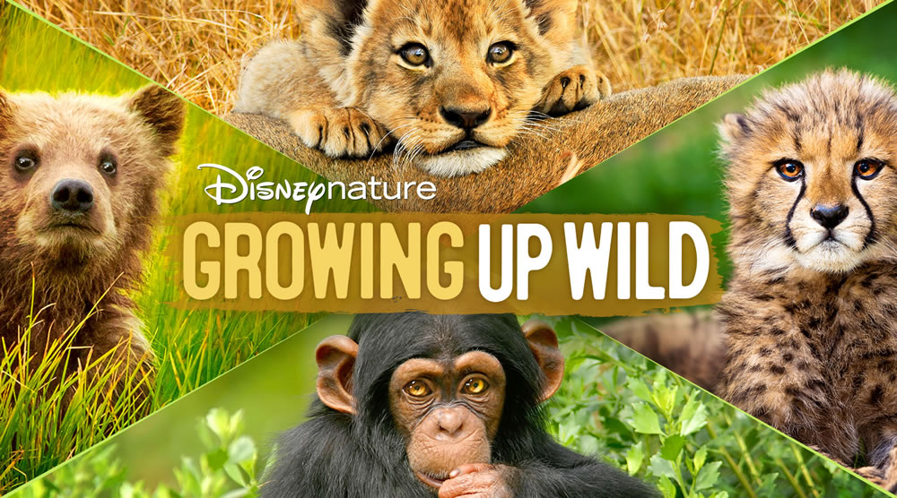 Netflix Animal Shows-Growing Up Wild Disney film poster shows a baby bear, lion cub, cheetah cub and baby monkey