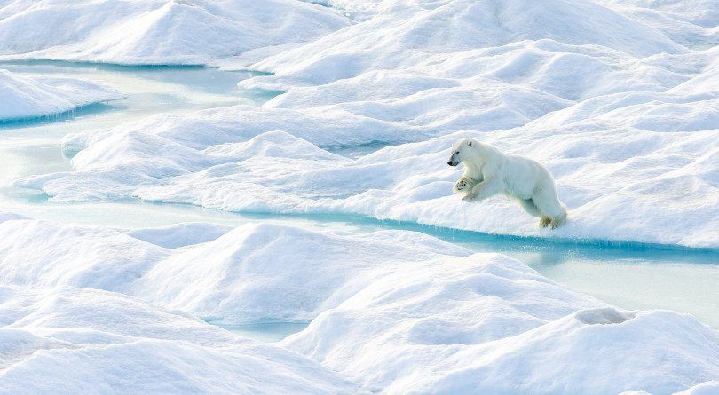 A polar bear leaps from an ice floe in Nunavut.