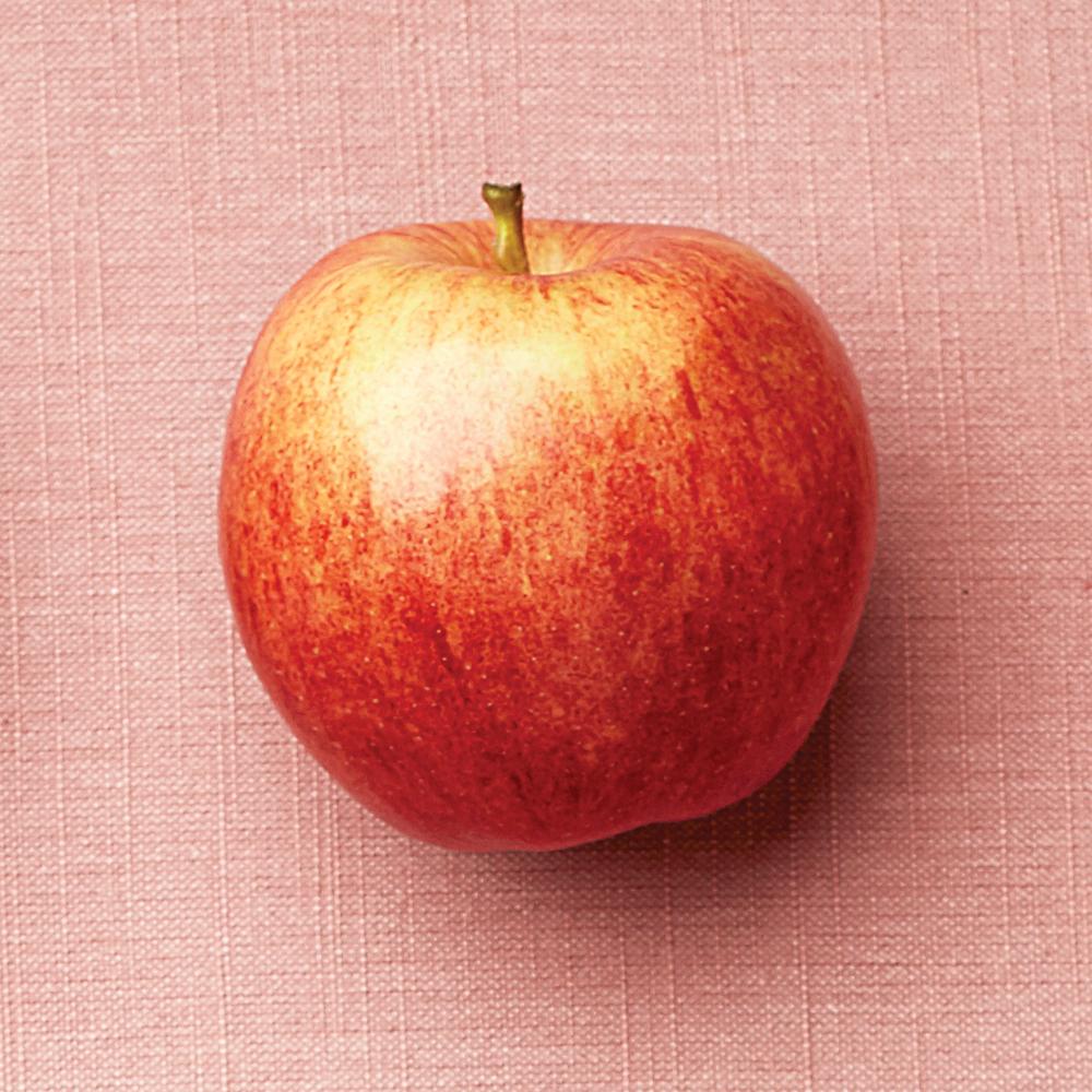 a gala apple on a pick backdrop