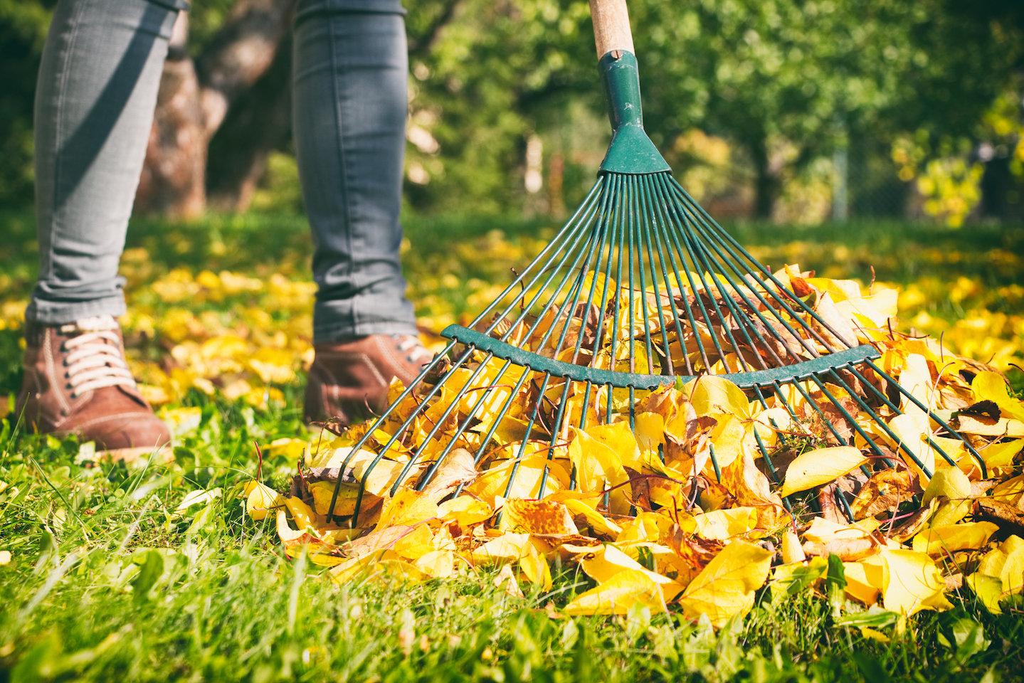 rake up