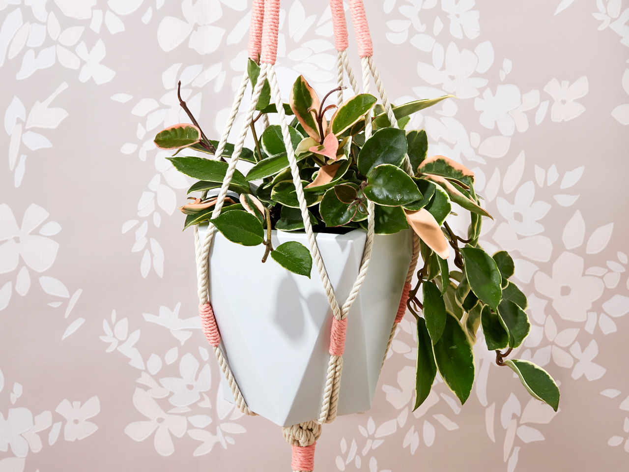 Hoya plant in a macramé hanging basket on a pink floral wallpaper background.