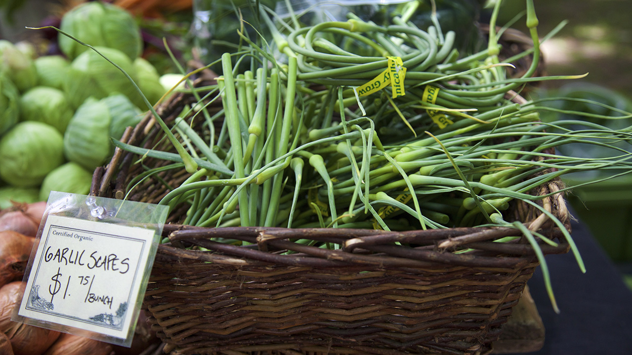 fresh garlic scapes at the farmer's market