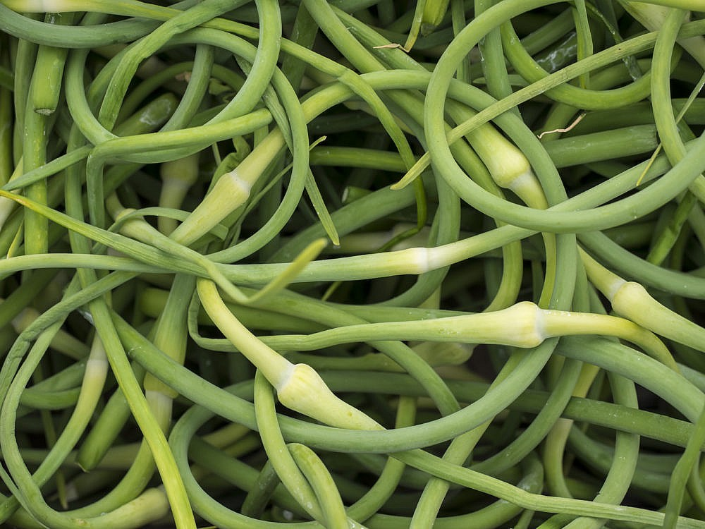 a close up of a bunch of fresh garlic scapes