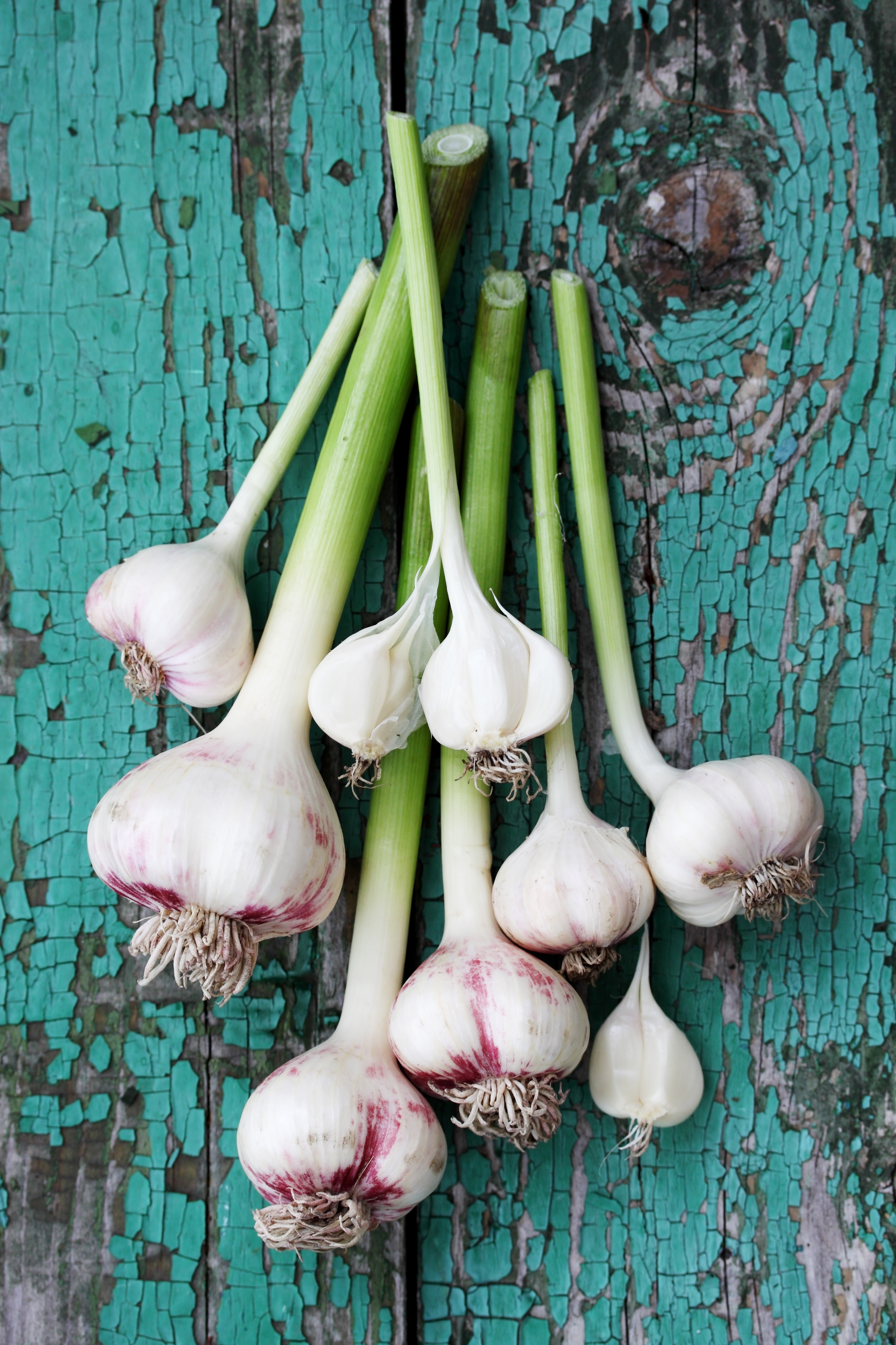 Fresh garlic on a wooden board that is painted green.