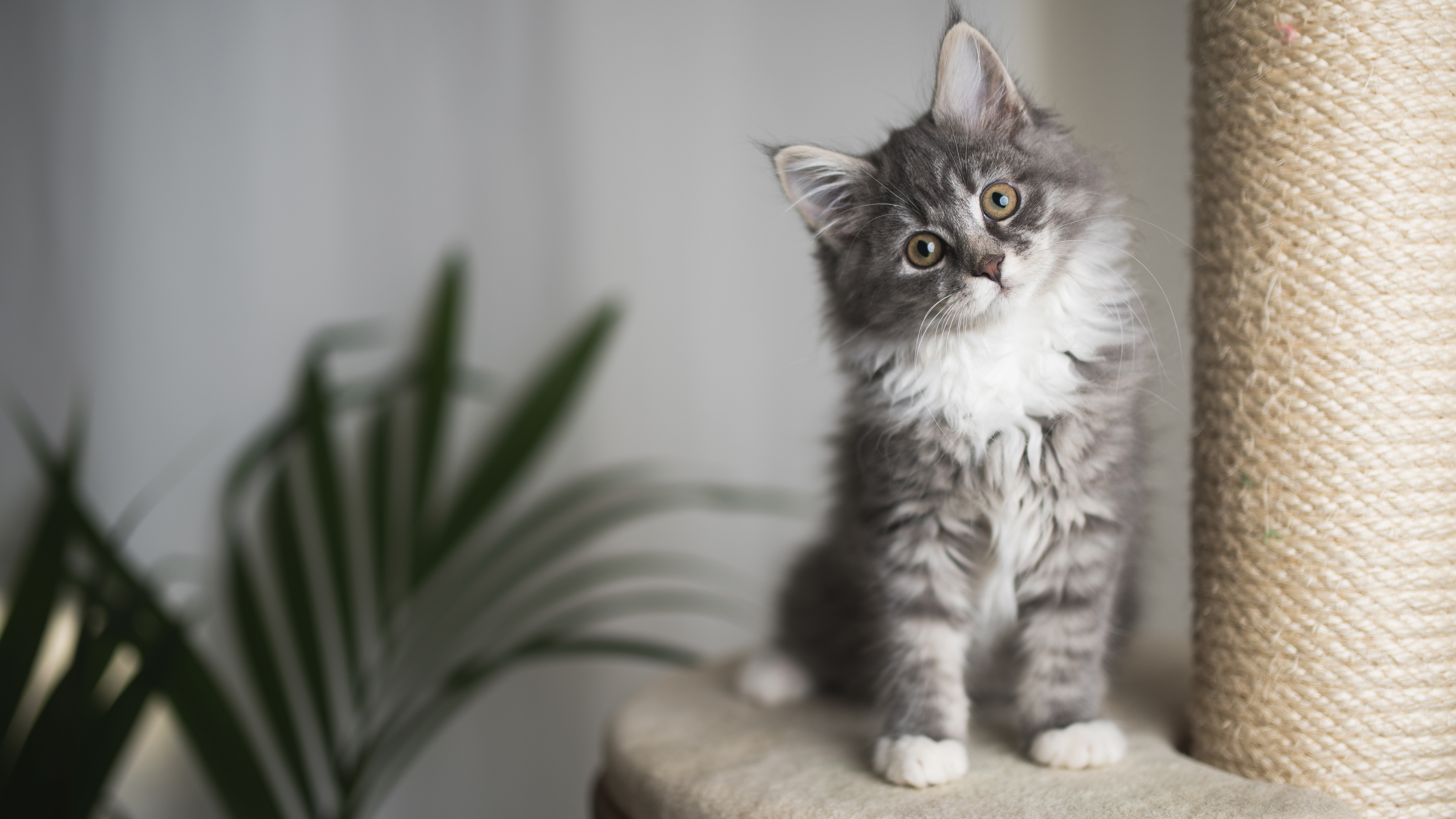 A kitten on a scratching post for a piece on how to keep indoor cats stimulated and happy