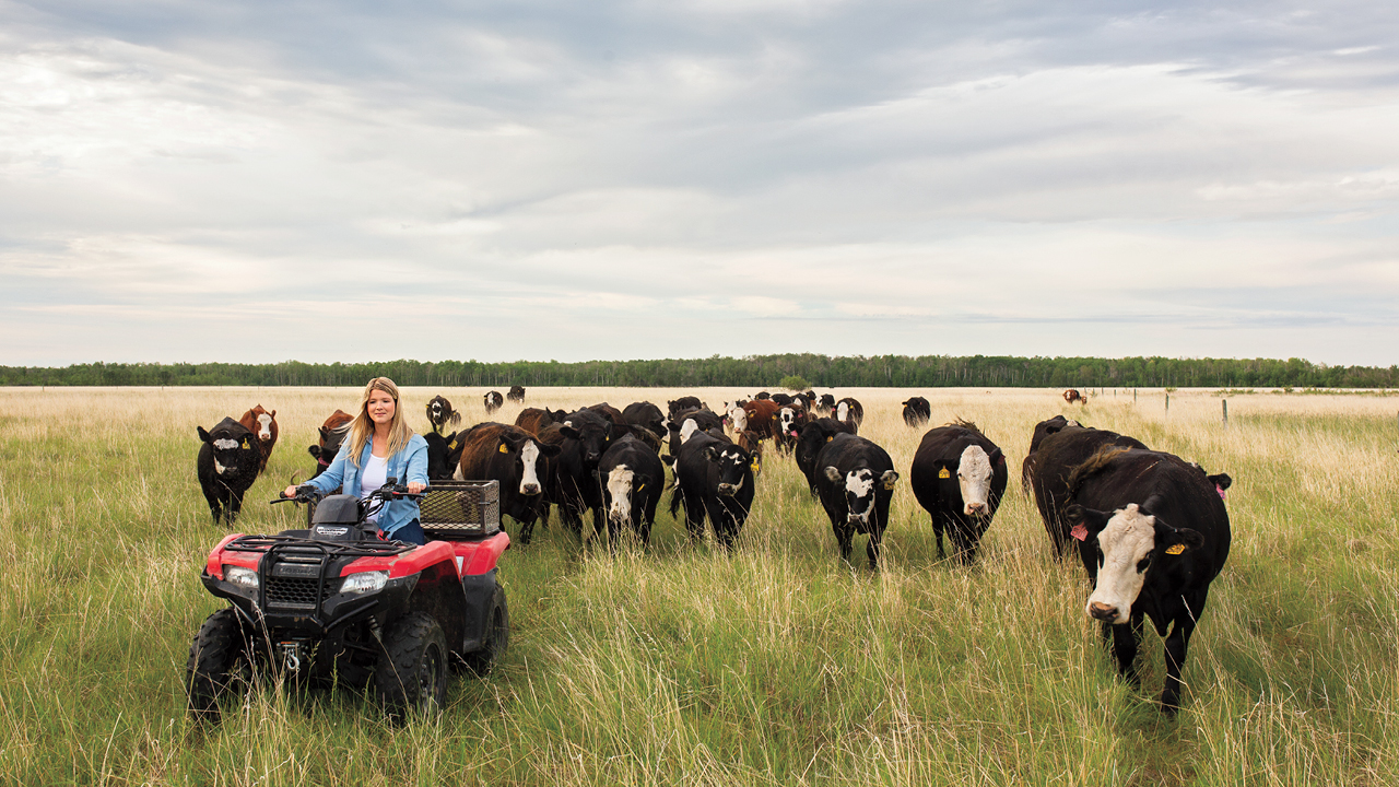 Kristine Tapley drives an ATV on farm land, with a group of cows following behind her