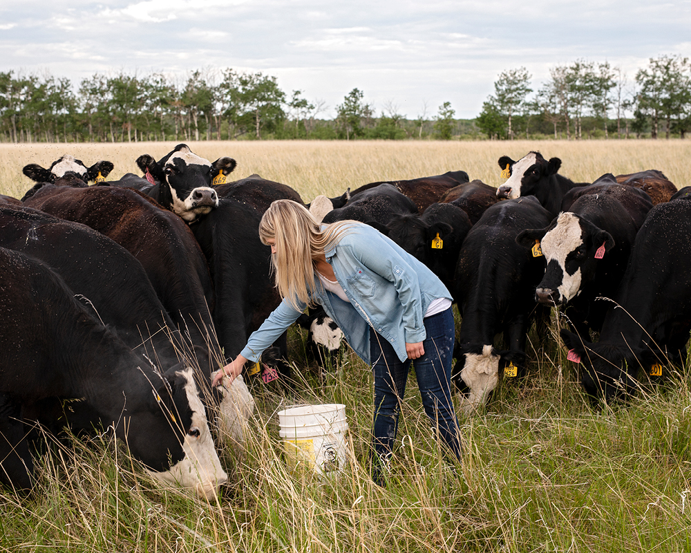 Kristine Tapley reaches to pet a brown cow. There are a group of brown cows behind her